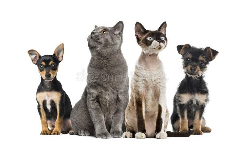 Geïsoleerd groep die katten en honden, zitten royalty-vrije stock foto's