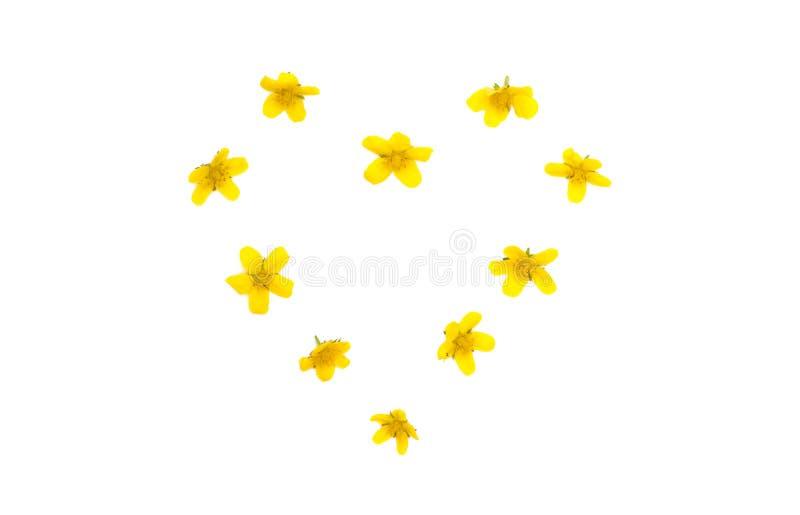 Geïsoleerd hart van gele bloemen stock foto