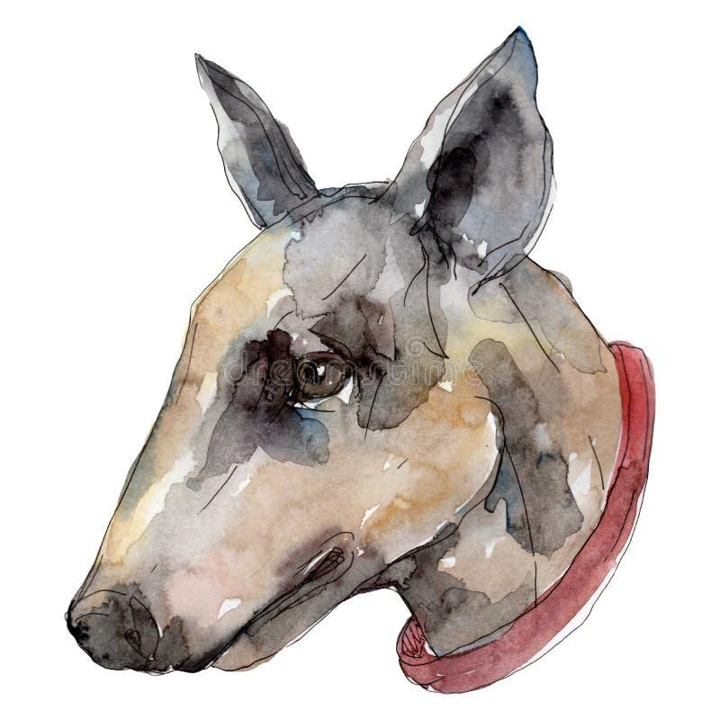 Geïsoleerd hond hoofdhuisdier Waterverf achtergrondillustratiereeks Het geïsoleerde element van de hondenillustratie stock illustratie