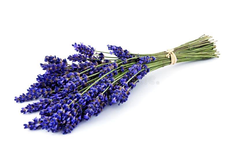 Geïsoleerd lavendelboeket stock afbeelding
