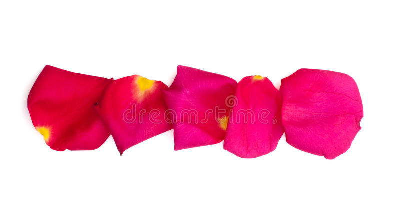 Geïsoleerd nam en heldere roze bloemblaadjes toe royalty-vrije stock foto's