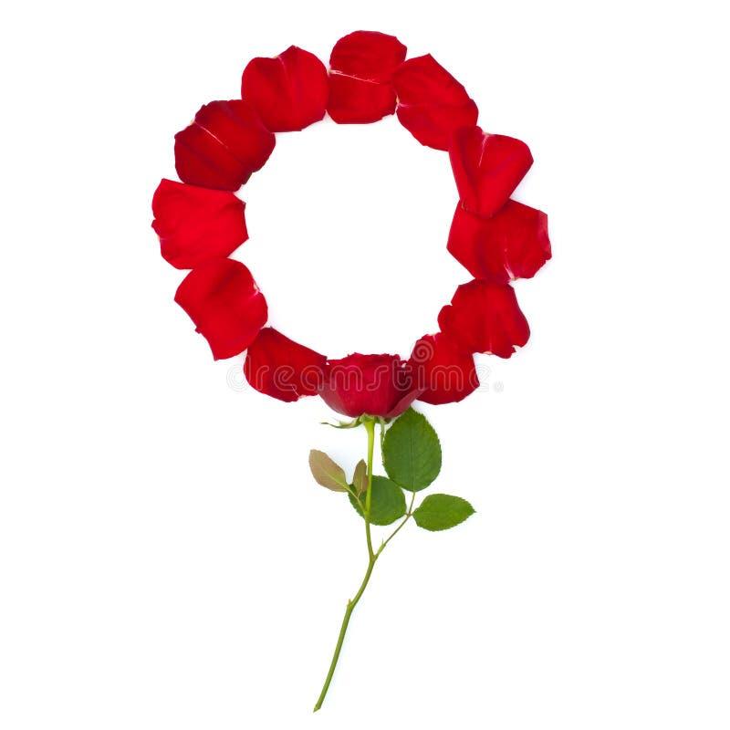 Geïsoleerd nam toe en de heldere rode bloemblaadjes van namen toe royalty-vrije stock afbeeldingen