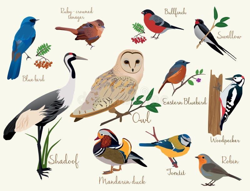 Geïsoleerd op witte achtergrond Kleurrijke realistische vogelspictogrammen geplaatst geïsoleerd vector illustratie