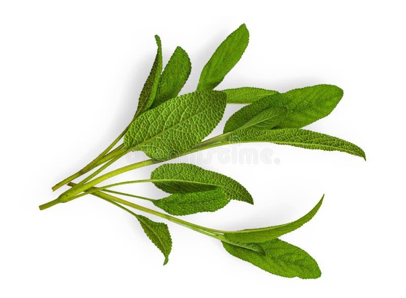 Geïsoleerd Sage Leaves stock afbeelding