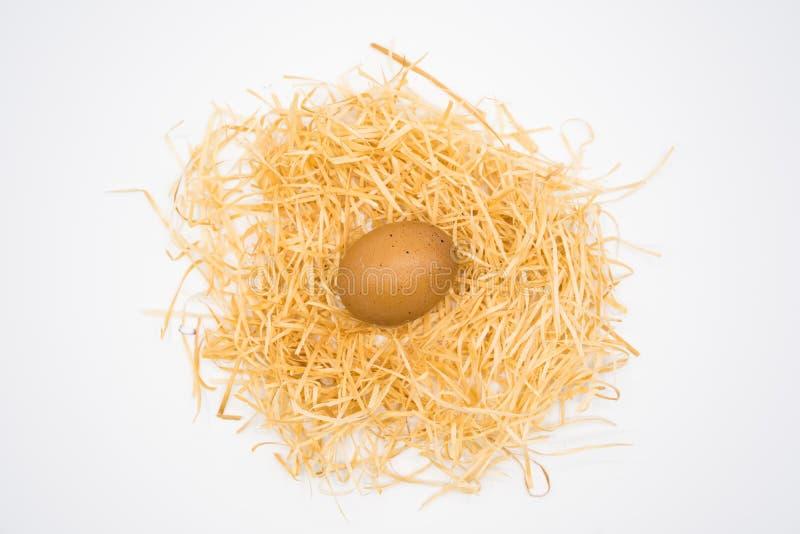 Geïsoleerd van het enige ei op het nest stock fotografie