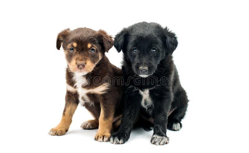 Geïsoleerdb puppy stock afbeeldingen