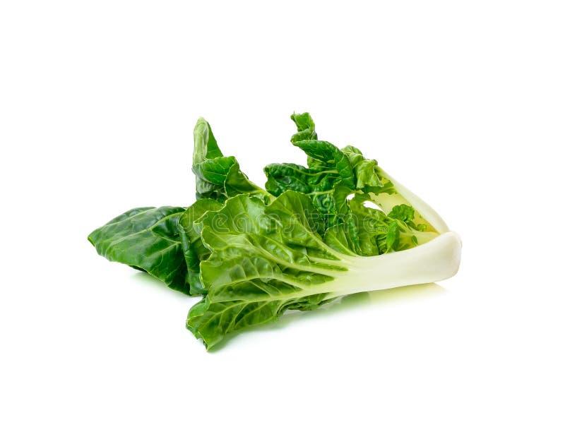 Geïsoleerde Bok choy groente royalty-vrije stock fotografie