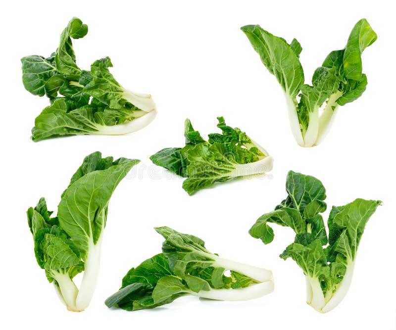 Geïsoleerde Bok choy groente royalty-vrije stock afbeeldingen
