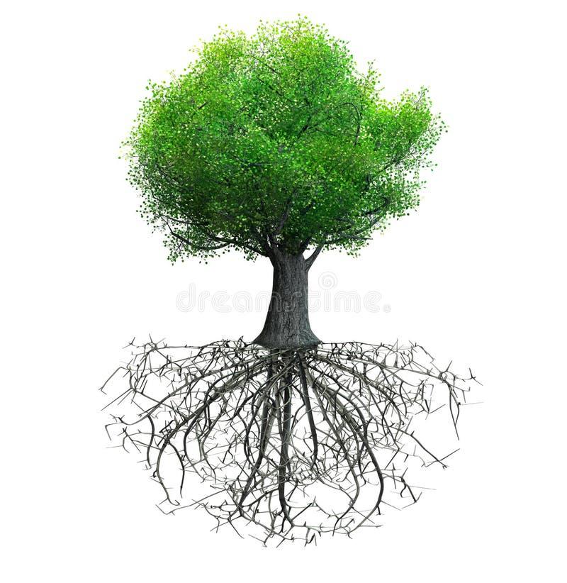 Geïsoleerde boom stock illustratie