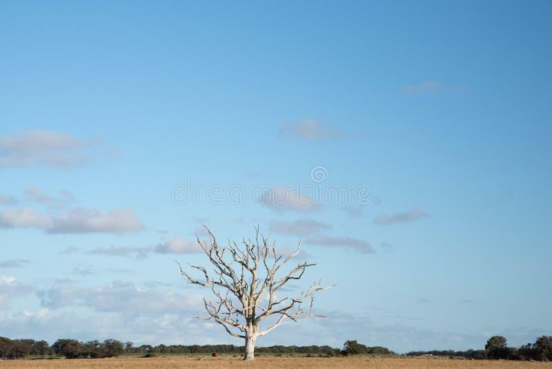 Geïsoleerde boom op een droog en bebouwbaar landbouwbedrijf royalty-vrije stock afbeeldingen