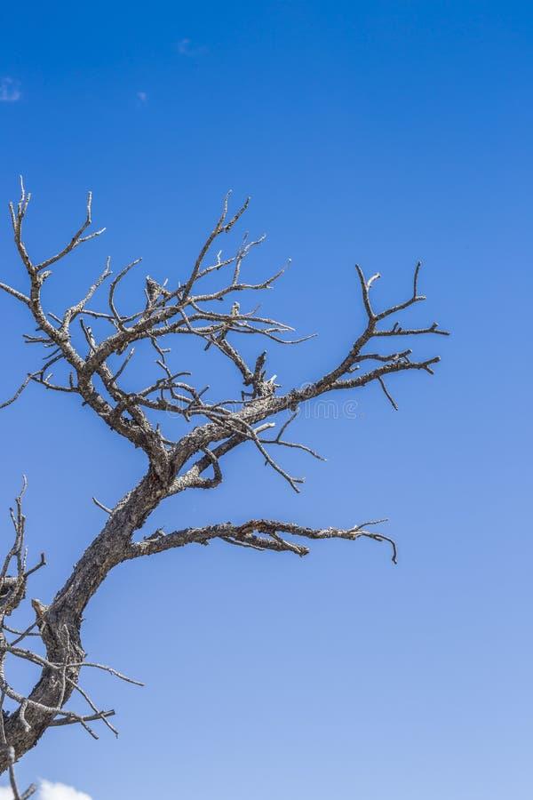 Geïsoleerde boomtakken in Eagle Canyou, Utah royalty-vrije stock fotografie