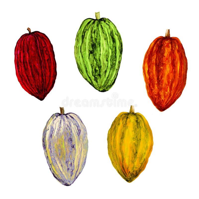 Geïsoleerde botanische illustratie van cacao, de illustratie van de waterverfcacao, hand getrokken cacao royalty-vrije illustratie