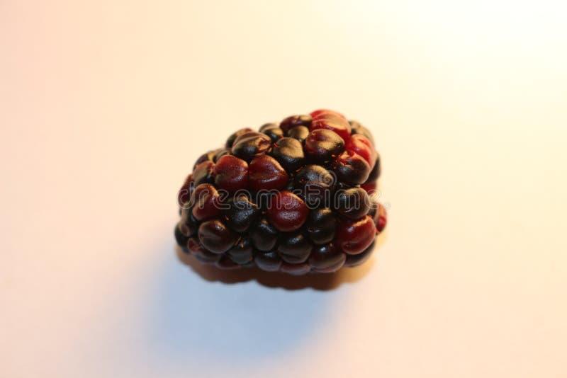 Geïsoleerde braambessen die sappig en rijp kijken De braambessen zijn van de Rubus-soort in de Rosaceae-familie royalty-vrije stock foto's