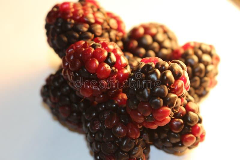 Geïsoleerde braambessen die sappig en rijp kijken De braambessen zijn van de Rubus-soort in de Rosaceae-familie stock afbeelding