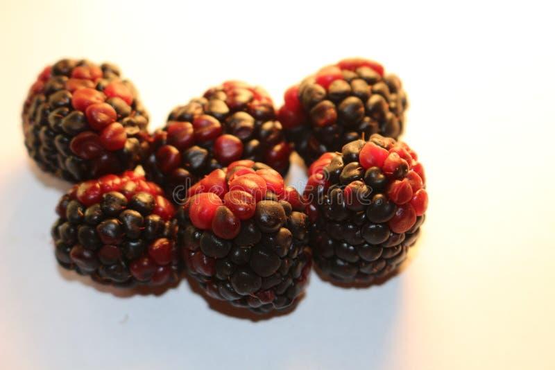 Geïsoleerde braambessen die sappig en rijp kijken De braambessen zijn van de Rubus-soort in de Rosaceae-familie royalty-vrije stock afbeeldingen