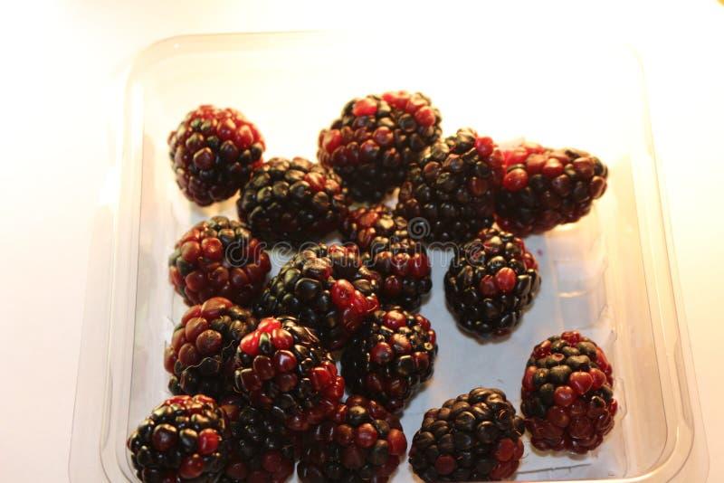 Geïsoleerde braambessen die sappig en rijp kijken De braambessen zijn van de Rubus-soort in de Rosaceae-familie royalty-vrije stock foto
