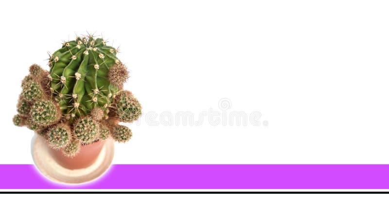 Geïsoleerde Cactus met witte achtergrond stock fotografie