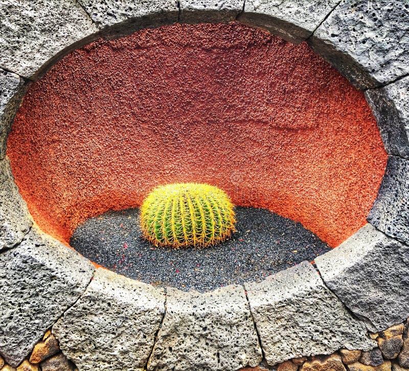 Geïsoleerde cactus op de muur stock fotografie