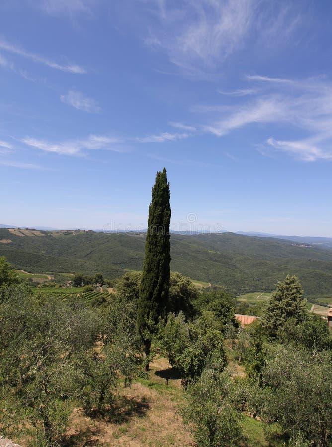 Geïsoleerde Cipresboom op een heuvel die de Heuvels van Toscanië in de zomer overzien royalty-vrije stock foto's