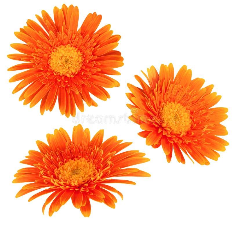 Geïsoleerde_ de bloemen van Daisy royalty-vrije stock afbeeldingen