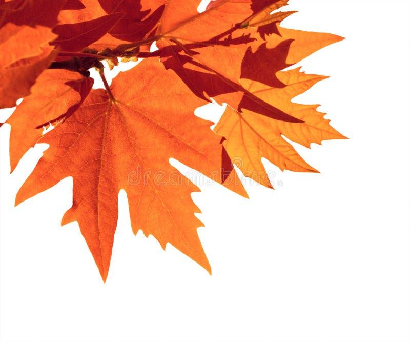 Geïsoleerde de herfstbladeren vector illustratie