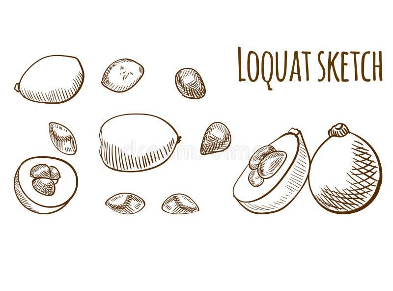 Geïsoleerde de tekening van het Loquatoverzicht Vector illustratiereeks stock illustratie