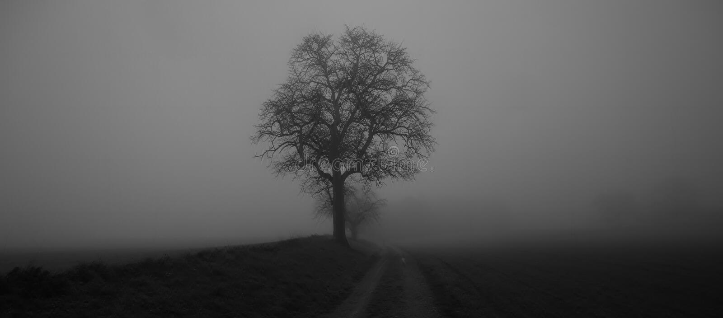 Geïsoleerde die boom in mist door geheimzinnig somber landschap wordt omringd royalty-vrije stock afbeelding