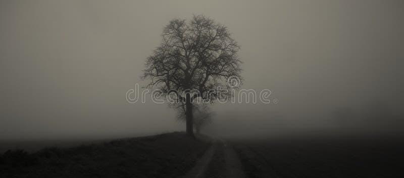 Geïsoleerde die boom in mist door geheimzinnig somber landschap wordt omringd stock afbeelding