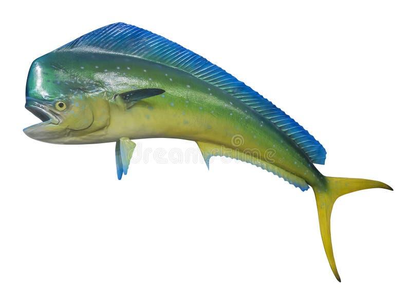 Geïsoleerde dolfijnvissen, royalty-vrije stock foto's