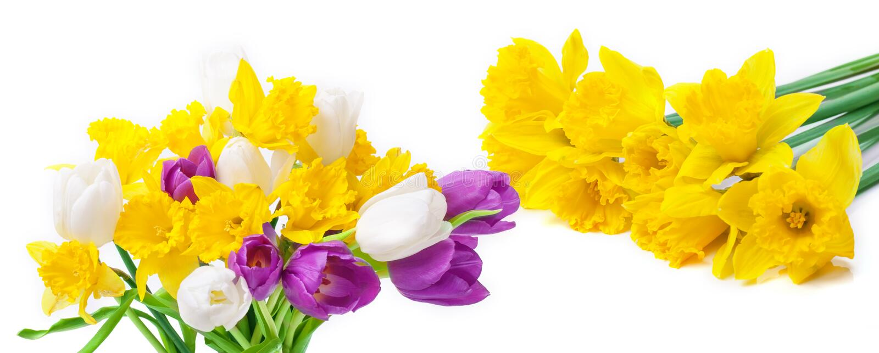 Geïsoleerde gele narcissen en tulpen, royalty-vrije stock afbeelding