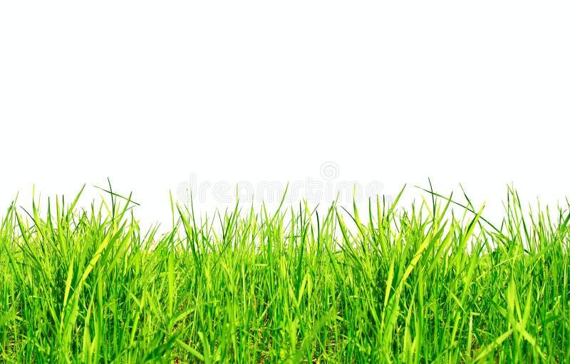 Geïsoleerde gras stock foto's