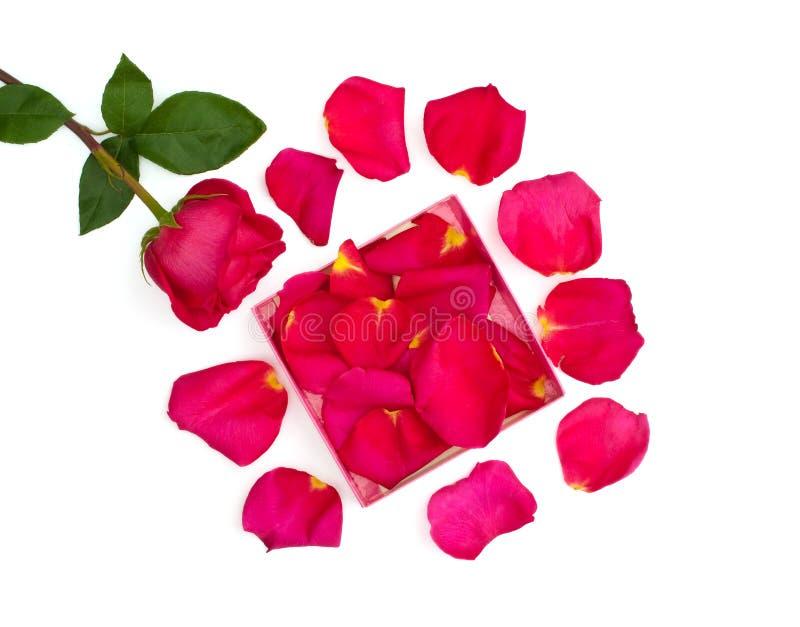 Geïsoleerde helder nam en bloemblaadjes in de doos toe stock afbeeldingen