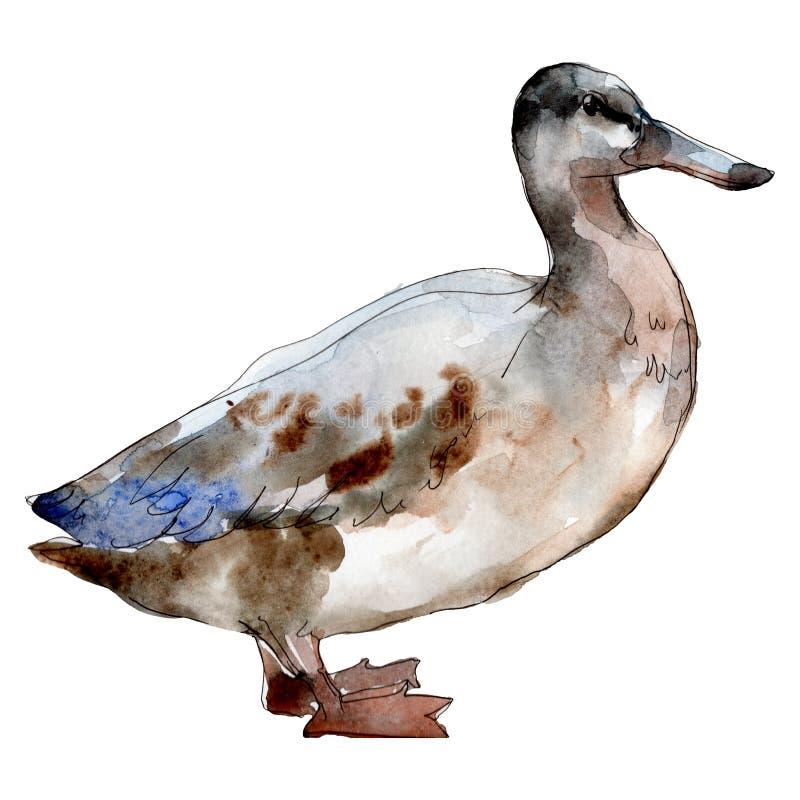 Geïsoleerde het dier van het ganslandbouwbedrijf Waterverf achtergrondillustratiereeks Het geïsoleerde element van de eendillustr stock illustratie