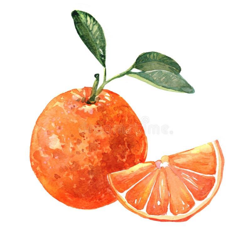 Geïsoleerde illustratie van het waterverf de oranje fruit stock illustratie