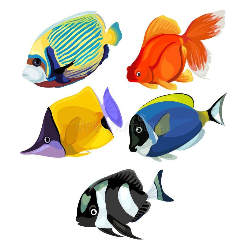 Geïsoleerde inzameling van gekleurde tropische vissen royalty-vrije illustratie