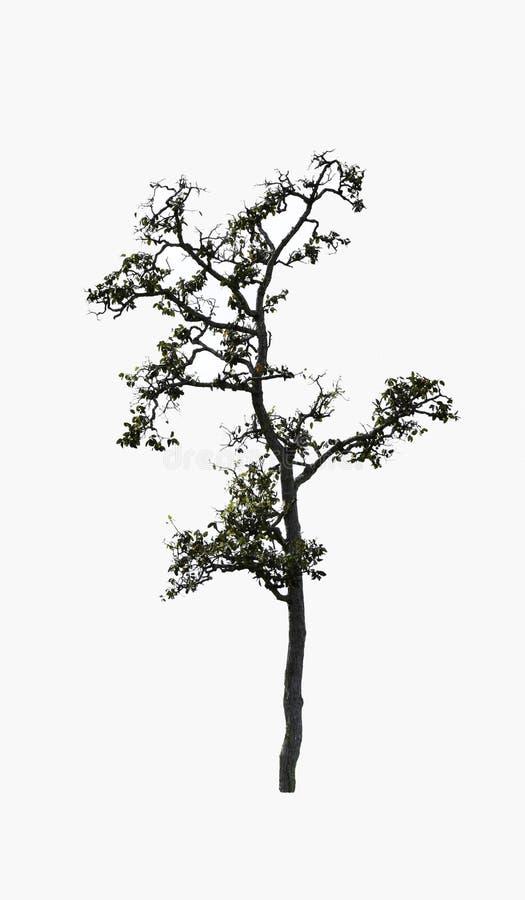Geïsoleerde inzameling van mooie groene bomen stock afbeelding