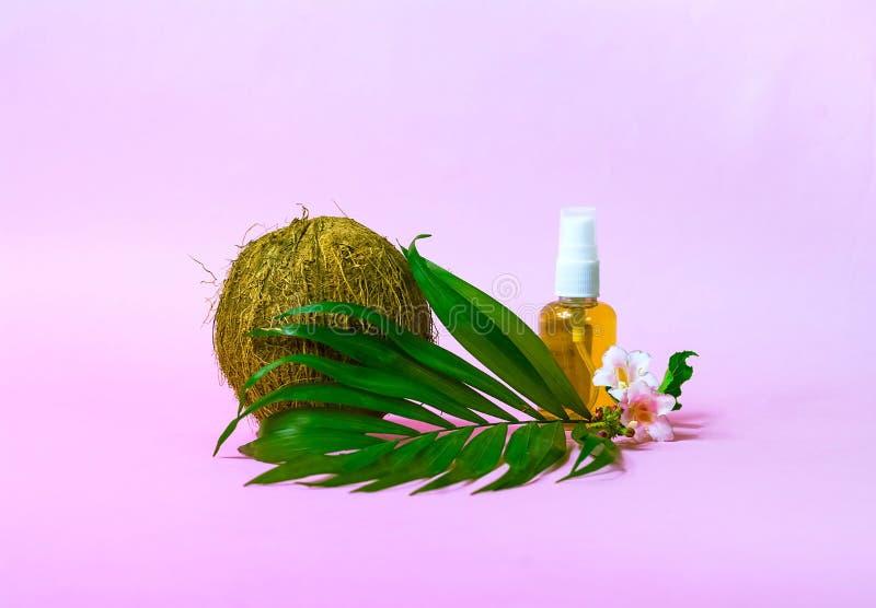 Geïsoleerde kokosnotenolie en verse kokosnoten Creatieve lay-out die van kokosnoten en bladeren op roze achtergrond wordt gemaakt stock foto