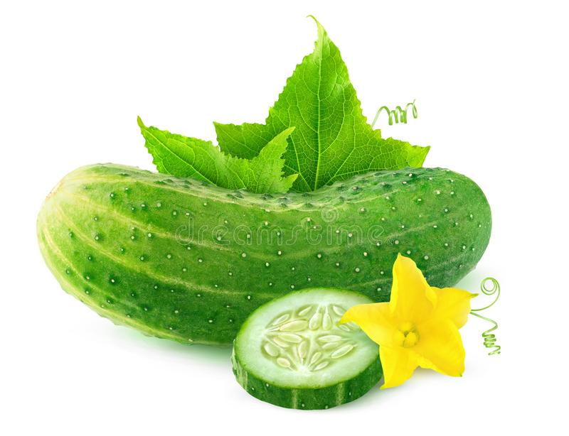 Geïsoleerde komkommer met bloem en bladeren stock afbeelding
