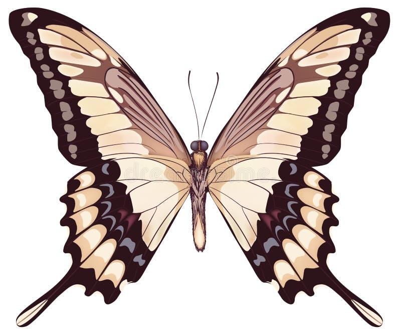 Geïsoleerde Lichte Vlinder royalty-vrije illustratie