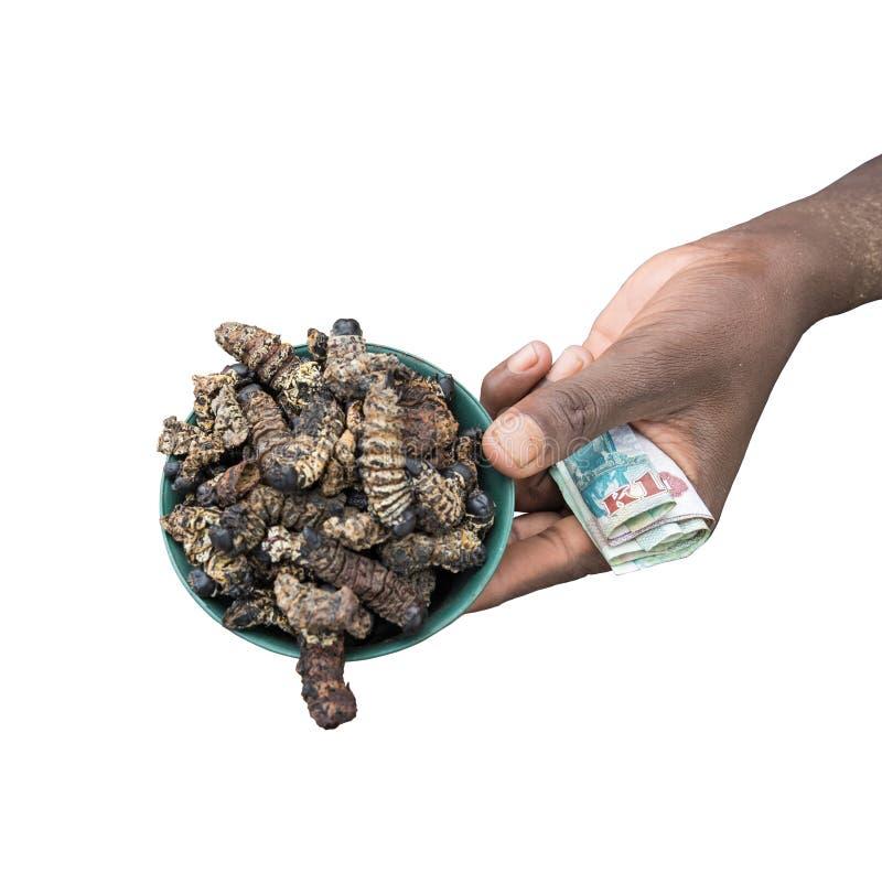 Geïsoleerde linkerhand met rekeningen en kleine kom van geroosterde mopane rupsbanden, Gonimbrasia-belina bij de markt in livings stock foto's