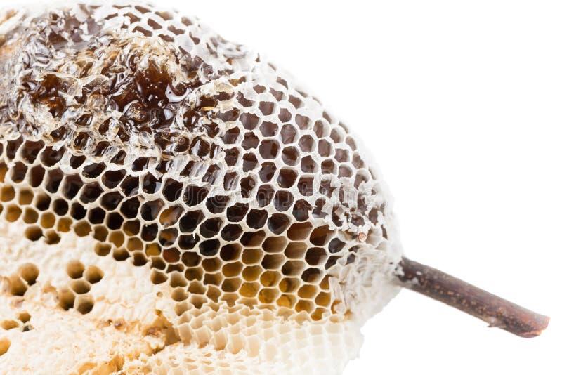 Geïsoleerde macro van bijenkorf stock foto