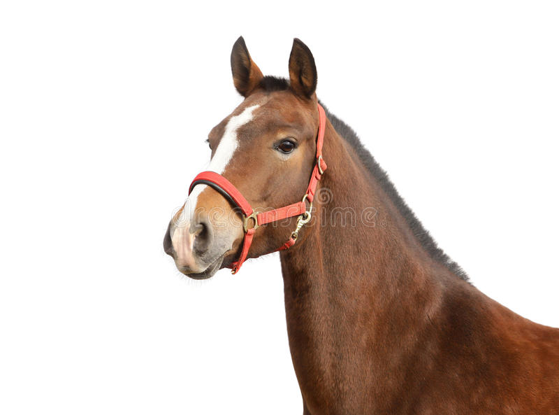 Geïsoleerde paard stock afbeelding