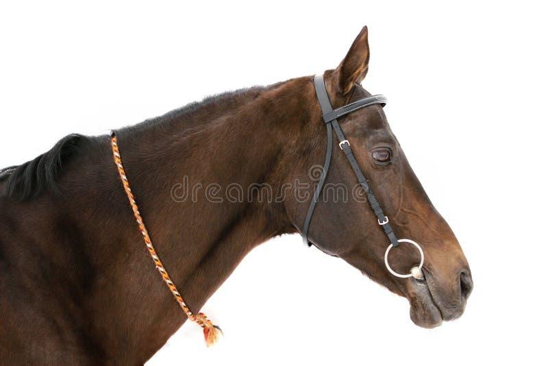 Geïsoleerde paard