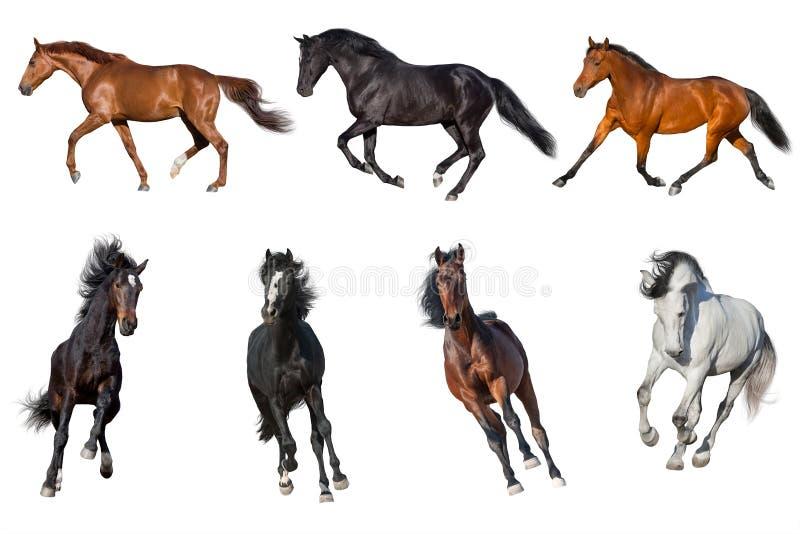 Geïsoleerde paardinzameling royalty-vrije stock afbeelding