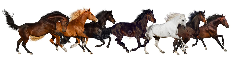 Geïsoleerde paardkudde stock foto's