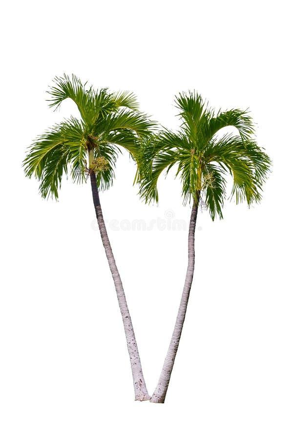Geïsoleerde palm stock foto