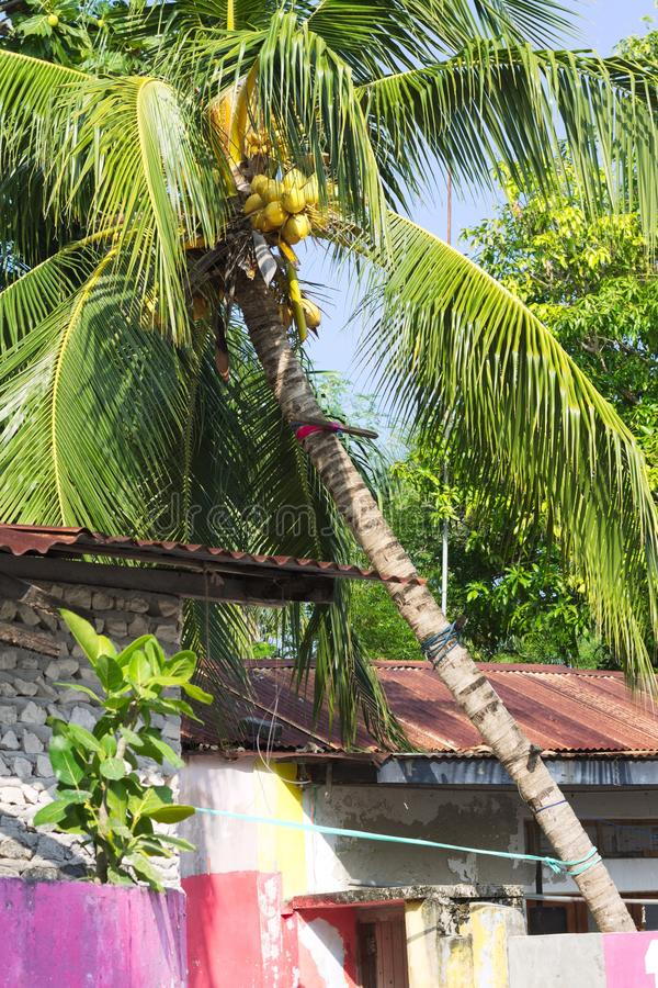 Geïsoleerde palm boven gekleurde huizen royalty-vrije stock afbeeldingen