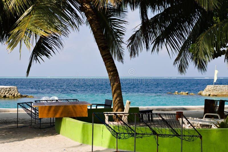 Geïsoleerde palm in de haven royalty-vrije stock fotografie