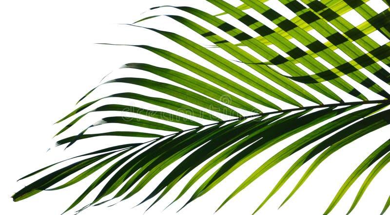 Geïsoleerde palmbladen royalty-vrije stock fotografie