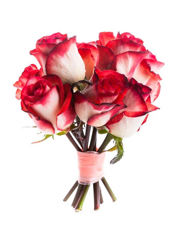 Geïsoleerde rozen stock afbeeldingen